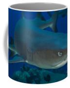 Whitetip Reef Shark, Kimbe Bay, Papua Coffee Mug