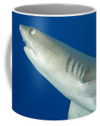Whitetip Reef Shark, Kimbe Bay, Papua Coffee Mug