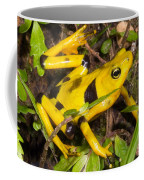 Harlequin Toad Coffee Mug