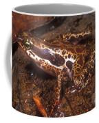 Harlequin Frog Coffee Mug