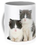 Kittens Coffee Mug