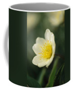 A Close View Of A Wildflower In Yoho Coffee Mug