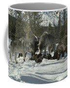 A Pack Of Gray Wolves, Canis Lupus Coffee Mug