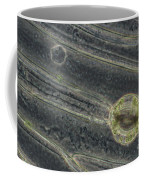 Amaryllis Leaf Epidermis Coffee Mug