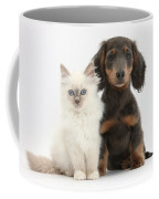 Blue-point Kitten & Dachshund Coffee Mug