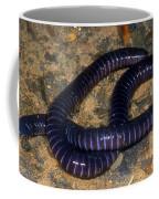 Boettgers Caecilian Coffee Mug