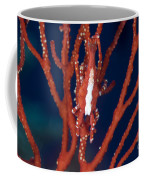 Bright Red Crab On Fan Coral, Papua New Coffee Mug