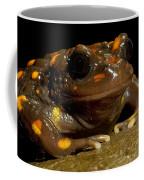 Chilean Mountains False Toad Coffee Mug