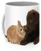 Chocolate Labrador Pup Coffee Mug