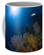 Coral And Sponge Reef, Belize Coffee Mug