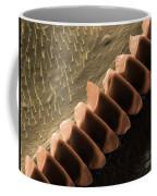 Cricket Sound Comb, Sem Coffee Mug