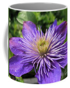 Double Clematis Named Crystal Fountain Coffee Mug