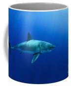 Female Great White Shark, Guadalupe Coffee Mug