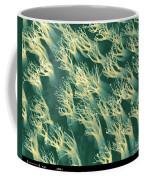 Gecko Foot Pads Coffee Mug
