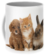 Ginger Kitten With Cavapoo Pup Coffee Mug