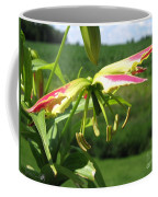 Gloriosa Named Rothschildiana Coffee Mug