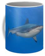 Gray Reef Shark. Papua New Guinea Coffee Mug