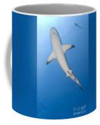 Gray Reef Shark With Remora, Papua New Coffee Mug by Steve Jones