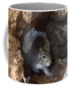 Gray Squirrel Coffee Mug by Ted Kinsman
