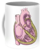 Illustration Of Heart Anatomy Coffee Mug by Science Source