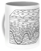 Illustration Of Stratified Squamous Coffee Mug