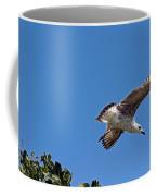 Juvenile Herring Gull Coffee Mug