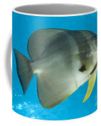 Longfin Spadefish, Papua New Guinea Coffee Mug