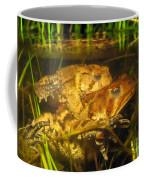 Mating Toads Coffee Mug