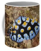 Nudibranch Feeding On Algae, Papua New Coffee Mug