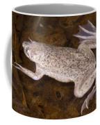 Sabana Surinam Toad Coffee Mug