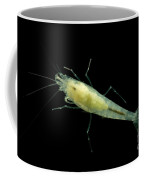 Taiji Cave Shrimp Coffee Mug