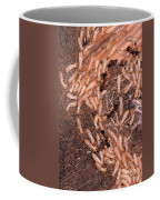 Termite Nest Reticulitermes Flavipes Coffee Mug by Ted Kinsman