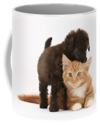 Toy Poodle Puppy With Kitten Coffee Mug