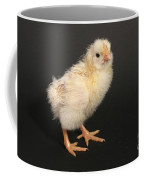 White Leghorn Chick Coffee Mug