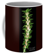 X-ray Of An Acanthus Flower Coffee Mug