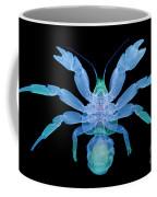 X-ray Of Coconut Crab Coffee Mug