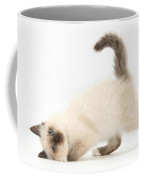 Birman-cross Kitten Coffee Mug