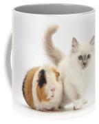 Blue-point Kitten And Guinea Pig Coffee Mug
