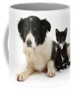 Border Collie And Tuxedo Kitten Coffee Mug