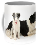 Border Collies Coffee Mug