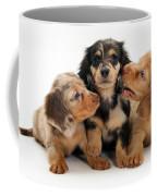 Dachshund Pups Coffee Mug by Jane Burton