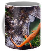 Easterm Newt Nnotophthalmus Viridescens 2 Coffee Mug