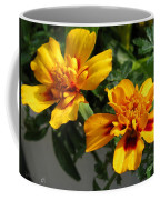 French Marigold Named Starfire Coffee Mug