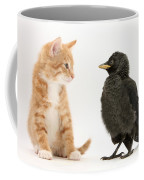 Jackdaw And Kitten Coffee Mug