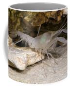 Mclanes Cave Crayfish Coffee Mug