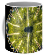 Micrasterias Coffee Mug by Michael Abbey and Photo Researchers