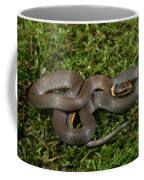 Northern Ringneck Snake Coffee Mug