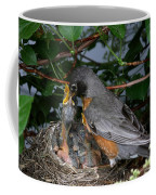 Robin Feeding Its Young Coffee Mug