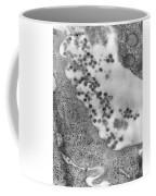 Rubella Virus. Tem Coffee Mug by Science Source