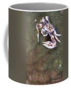 Spotted Porcelain Crab Feeding Coffee Mug